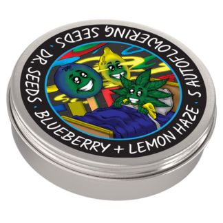 Blueberry + Lemon Haze Autoflowering Feminized Seeds (5 cannabis seeds)