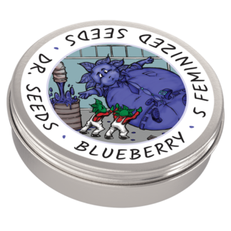 Blueberry Photoperiod Feminized Seeds (5 cannabis seeds)