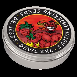 Devil XXL Autoflowering Feminized Seeds (5 cannabis seeds)