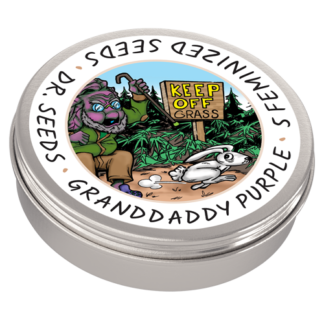 Granddaddy Purple Photoperiod Feminized Seeds (5 cannabis seeds)