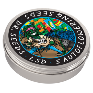 LSD Autoflowering Feminized Seeds (5 cannabis seeds)