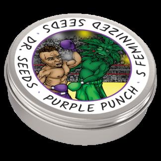 Purple Punch Photoperiod Feminized Seeds (5 cannabis seeds)