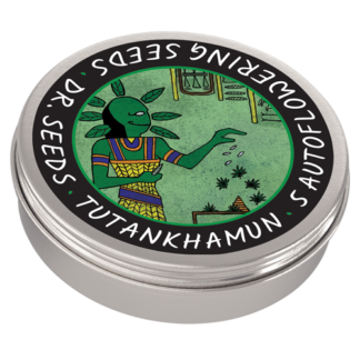 Tutankhamun Autoflowering Feminized Seeds (5 cannabis seeds)
